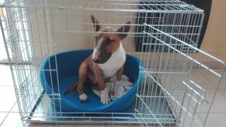 31505_Cage-de-transport-pour-chien-ZOLIA-XENA-avec-fond-en-métal_de_frederique_52351685559d31b8da74643.62740446