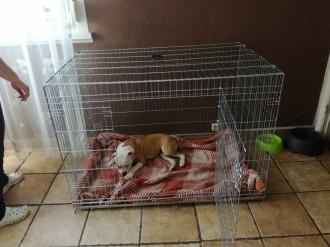 31505_Cage-de-transport-pour-chien-ZOLIA-XENA-avec-fond-en-métal_de_sebastien_9353833715b1b9d035fb7d6.10771985
