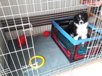 Cage-de-transport-pour-chien-ZOLIA-XENA-Double-porte-avec-fond-en-metal_de_CATHY_3393302205d09de3705ce66.82237139