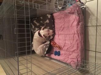 Cage-de-transport-pour-chien-ZOLIA-XENA-avec-fond-en-metal_de_Alisson_50084562659b289f2b06a57.82017681