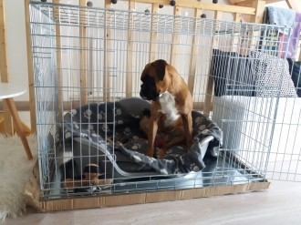 Cage-de-transport-pour-chien-ZOLIA-XENA-avec-fond-en-metal_de_Gabin_18917119345ae7346fe5ebe2.12760688