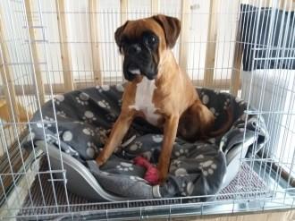 Cage-de-transport-pour-chien-ZOLIA-XENA-avec-fond-en-metal_de_Gabin_2891667445ae7346513c474.78654271