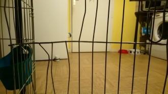 Cage-de-transport-pour-chien-ZOLIA-XENA-avec-fond-en-metal_de_JUSTINE_1782314025bb120ec57b691.38230050