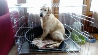 Cage-de-transport-pour-chien-ZOLIA-XENA-avec-fond-en-metal_de_Thierry_143455392591d5f05b61813.53894079