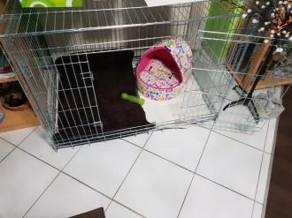 Transportkafig-fur-Hunde-Xena_de_Angela_3074939305c13463b3626b4.14825589