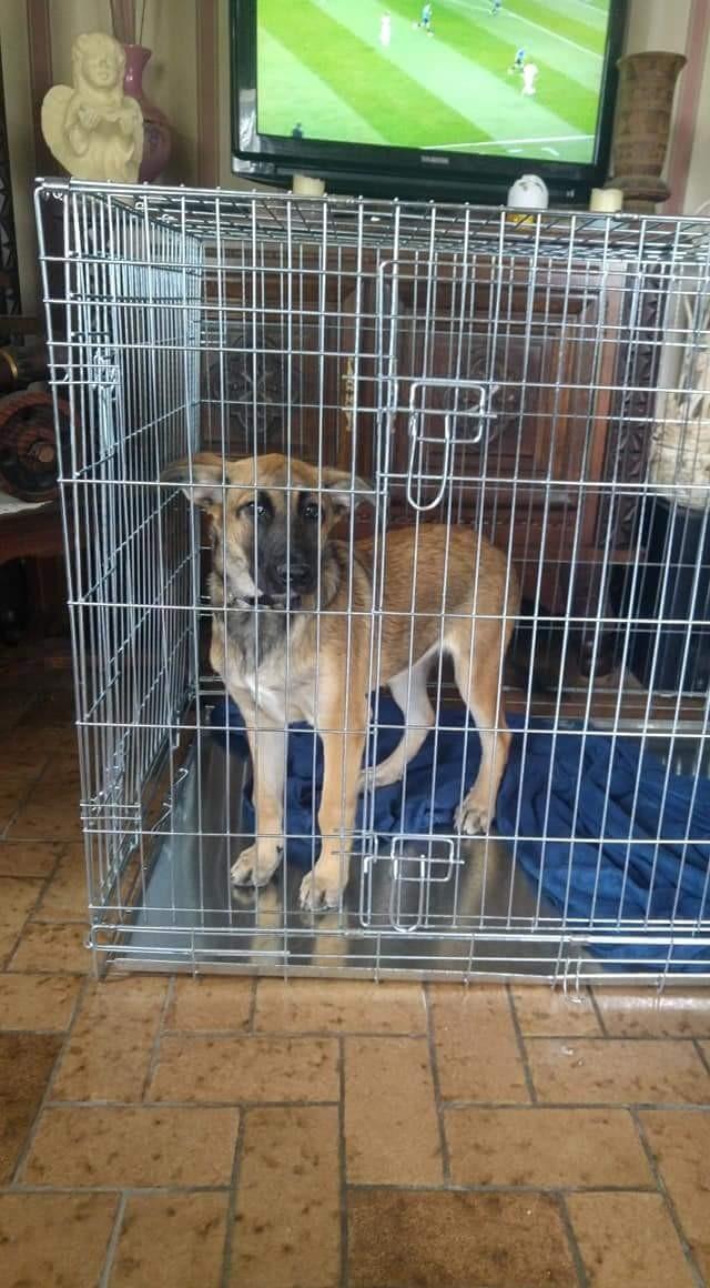 34d68629877efc Avis sur Cage de transport pour chien ZOLIA XENA avec fond en métal