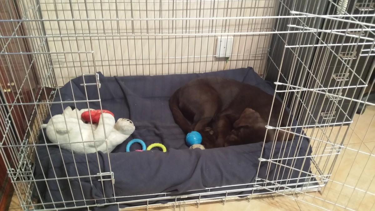 Resultado de imagen para perros en su jaula