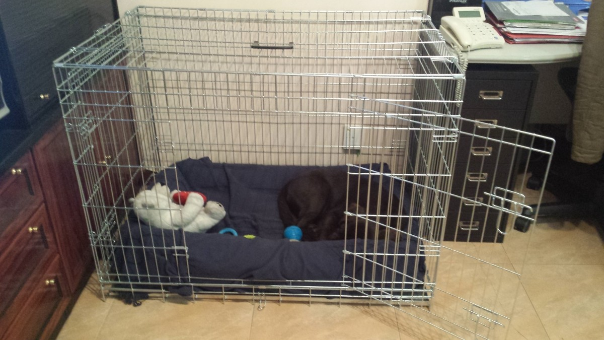 avis sur cage de transport pour chien zolia xena avec fond en m tal. Black Bedroom Furniture Sets. Home Design Ideas