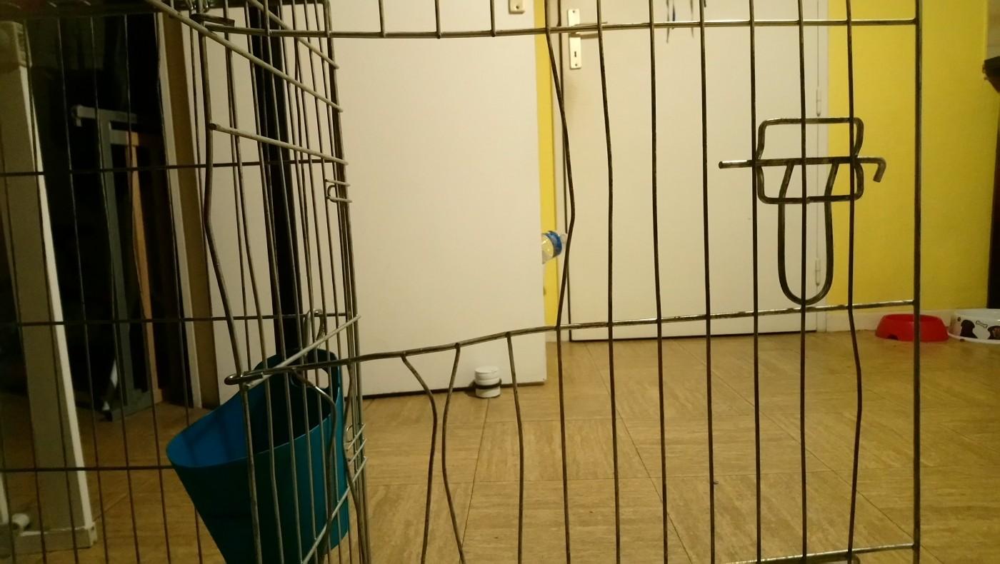 cage de transport pour chien zolia xena avec fond en m tal. Black Bedroom Furniture Sets. Home Design Ideas