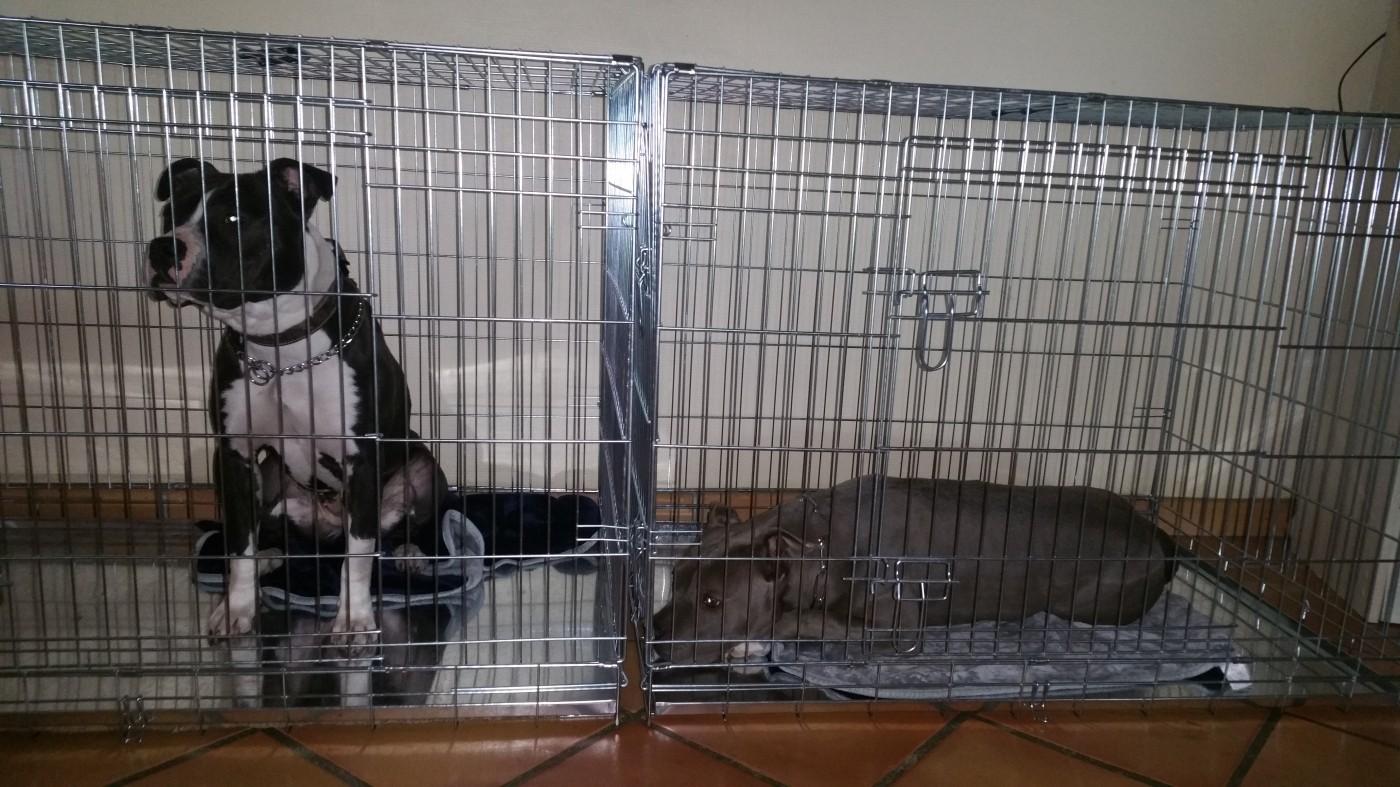 Avis sur Cage de transport pour chien ZOLIA XENA avec fond