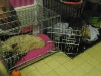 31505_Cage-de-transport-pour-chien-Xena-avec-fond-en-métal_de_Lygie_142291582358a586538c47e7.25920685