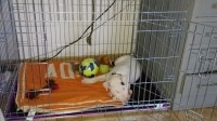 31505_Cage-de-transport-pour-chien-Xena-avec-fond-en-métal_de_garry_2146908570583fcb04740d24.28364529