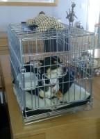 31505_Cage-de-transport-pour-chien-Xena-avec-fond-en-métal_de_jocelyne_157377453758ca808163ff29.16780046