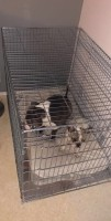 31505_Cage-de-transport-pour-chien-ZOLIA-XENA-avec-fond-en-métal_de_Claire_11611286335c0fcf059bd0b7.77077955