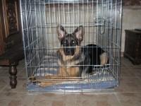 31505_Cage-de-transport-pour-chien-ZOLIA-XENA-avec-fond-en-métal_de_Laurent_74953297759b2b262534953.71377389