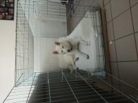 31505_Cage-de-transport-pour-chien-ZOLIA-XENA-avec-fond-en-métal_de_Virginie_3150427235b64498f67ca69.79790441
