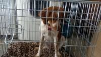 Cage-de-transport-pour-chien-Xena-avec-fond-en-metal_de_CATHY_172404082258072835d4a261.59690939