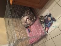 Cage-de-transport-pour-chien-ZOLIA-XENA-avec-fond-en-metal_de_Alisson_16205385859b289e5799fe3.52778136