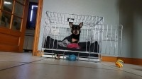 Cage-de-transport-pour-chien-ZOLIA-XENA-avec-fond-en-metal_de_Cassandra_11801017755af73e9aac2c56.32215881