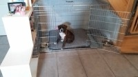 Cage-de-transport-pour-chien-ZOLIA-XENA-avec-fond-en-metal_de_Catherine_11075376575ace13d66b3155.93660410