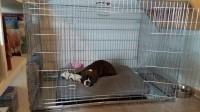 Cage-de-transport-pour-chien-ZOLIA-XENA-avec-fond-en-metal_de_Catherine_20181372285ace138b09ed68.89738363