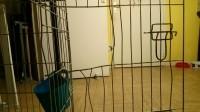 Cage-de-transport-pour-chien-ZOLIA-XENA-avec-fond-en-metal_de_JUSTINE_1962188605bb1212ca772a7.28920341