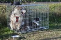 Cage-de-transport-pour-chien-ZOLIA-XENA-avec-fond-en-metal_de_NATHALIE_19241336345c9b38fd9c3ab8.84499055