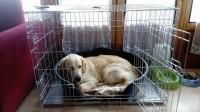 Cage-de-transport-pour-chien-ZOLIA-XENA-avec-fond-en-metal_de_Thierry_196992632591d5ee8cf2069.82049225