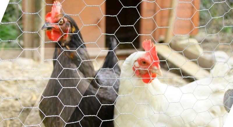 enclos zolia en métal poules sécurité