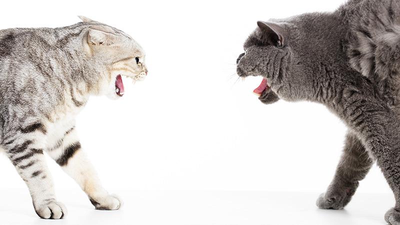 feliway diffuseur friends conflits