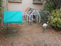 31805_Enclos,-cage-d'extérieur-fermé-ZOLIA-TITO-220cm_de_Deborah_1463099159785139037f96.04385414