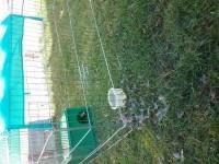 Enclos-d'exterieur-ferme-ZOLIA-TITO-220cm_de_Quentin_612077612584168a3e6f7f2.48477716