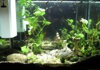 31840_Aquarium--Superfish-Home-80-blanc-ou-noir_de_jean_161056472358ae9cbb65f9d3.27040571