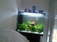 31840_Aquarium-blanc-ou-noir---Superfish-Home-80_de_REYNALD_119678266557e13e9874e860.52461086