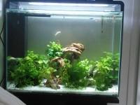 31840_Aquarium-blanc-ou-noir---Superfish-Home-80_de_REYNALD_164870854957e13e82dab031.40475216