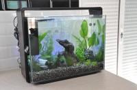 Aquarium--Superfish-Home-80-blanc-ou-noir_de_nathalie_184598984659e609db288f60.53990026