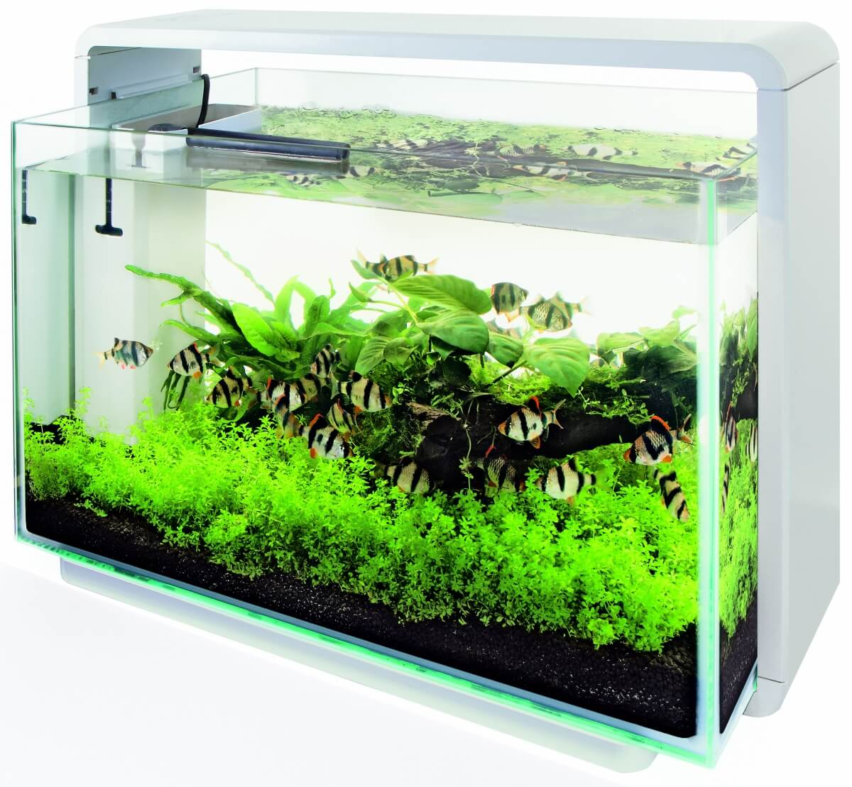 Aquarium  Superfish Home 80 blanc ou noir_1