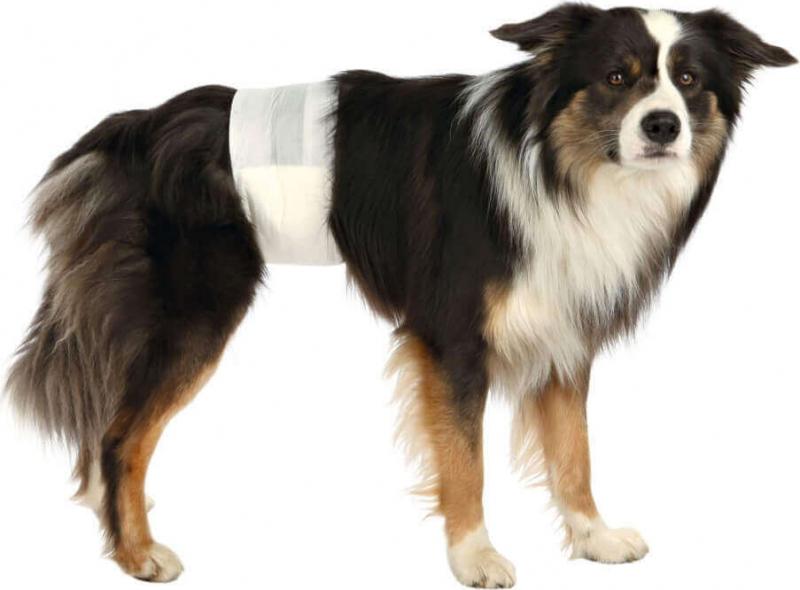 Couches pour chiens mâles