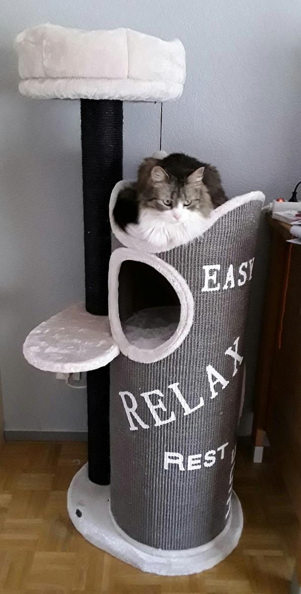 tour griffer combin e arbre chat juana 134cm griffoir. Black Bedroom Furniture Sets. Home Design Ideas