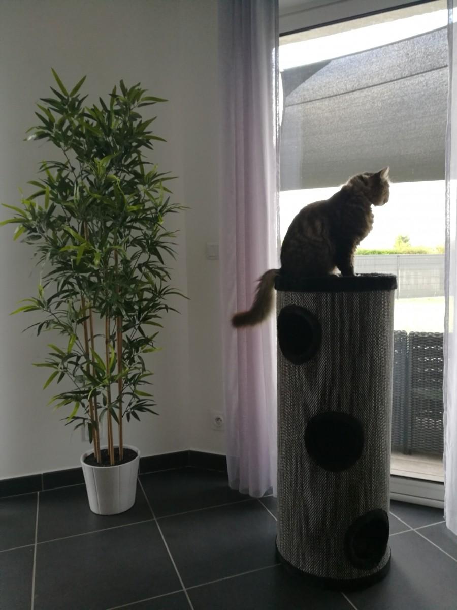 combin arbre chat et tour griffer amado 100cm griffoir. Black Bedroom Furniture Sets. Home Design Ideas