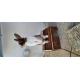 32394_Natural-Living-maison-en-bois-Ineke_de_Claire_81928273860bf5f409a65a6.69244723