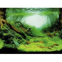 Fond décor pour aquarium eau froide