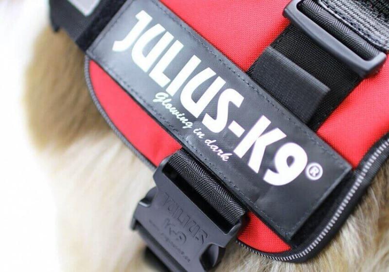 JULIUS K9 Harnais K9-Power Rouge