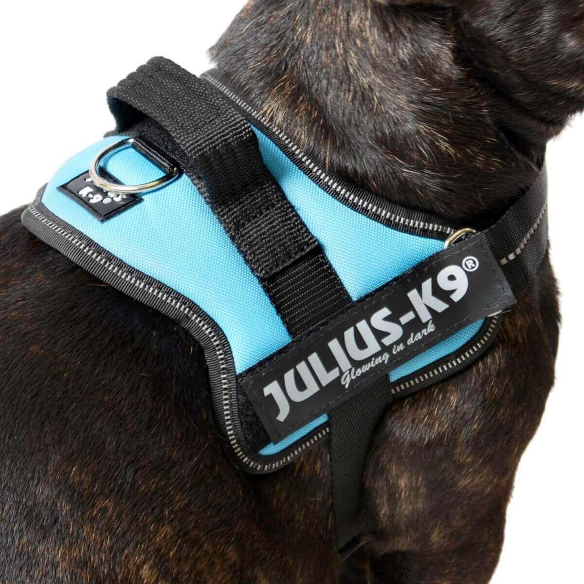 Harnais chien Power Julius-K9 aigue-marine_2