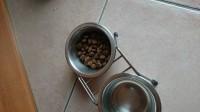 32574_ORIJEN-Original-Sans-Céréales-pour-chien-et-chiot_de_melanie_14500017725cfb6a6f1e1373.10947017