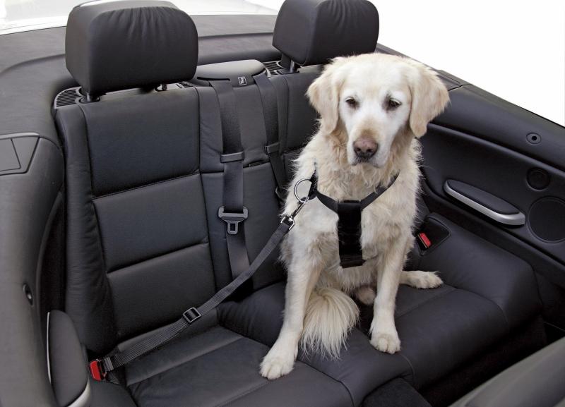 Arnés de seguridad para coche negro para perro