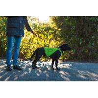 Gilet pour la sécurité du chien