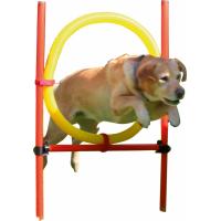 Kit complet Agility pour chien