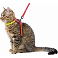 Harnais pour chat Rainbow 10 mm / 120 cm