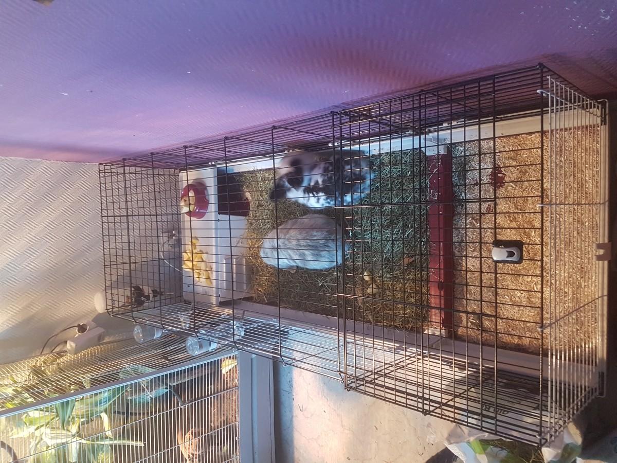 avis sur cage ferplast krolik 160 pour lapin et cochon d 39 inde. Black Bedroom Furniture Sets. Home Design Ideas